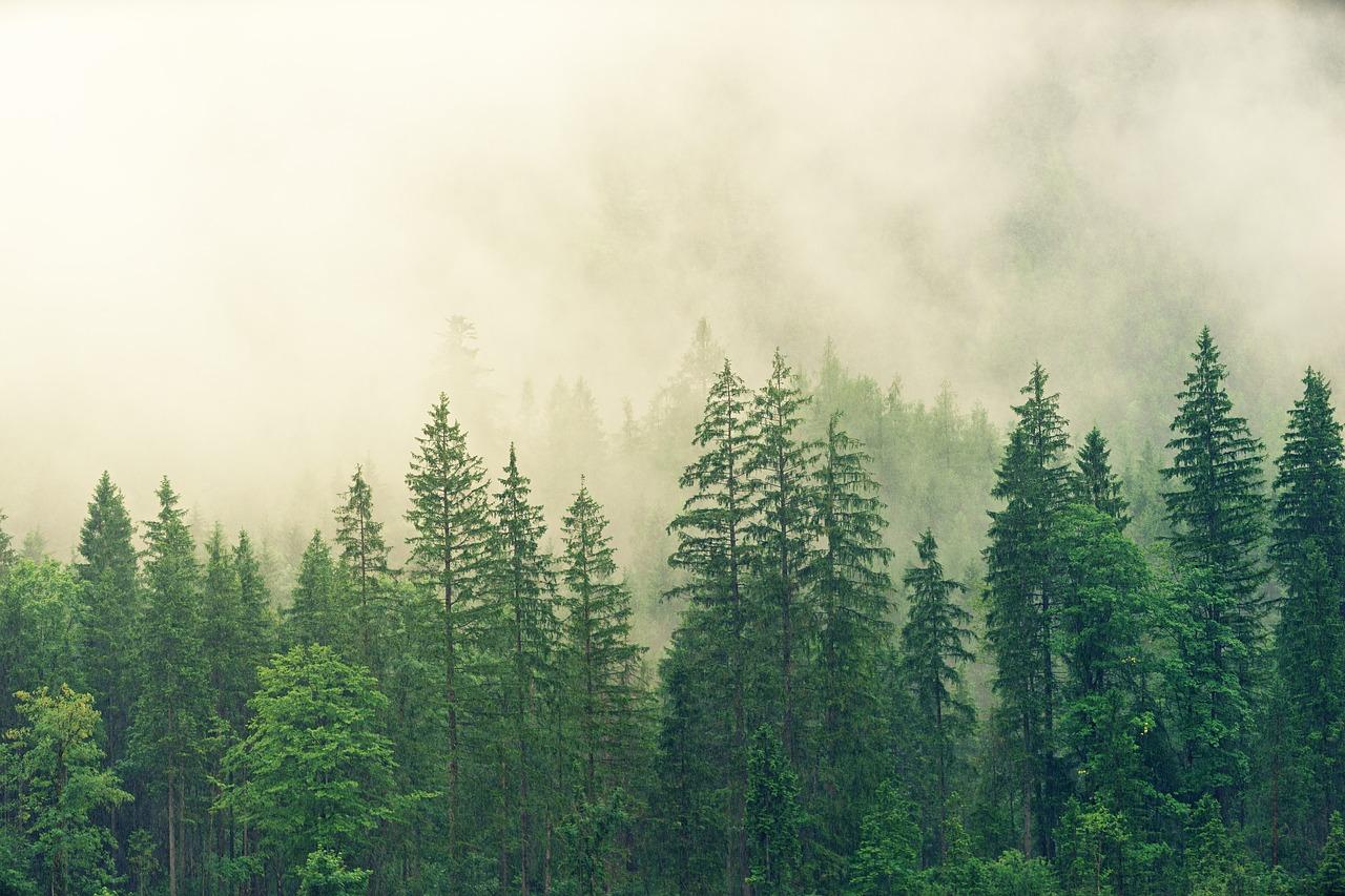 Faire un investissement forestier pour bénéficier d'une défiscalisation